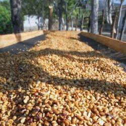 Káva HONDURAS TUCAN VERDE